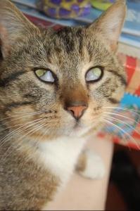 chat paupière